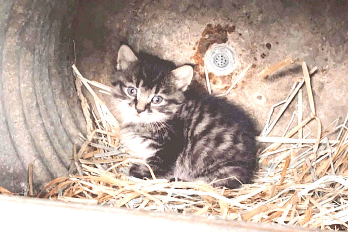 One of the baby kittens stolen from Aldor Acres (Facebook/Aldor Acres)